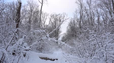 Panorama of the winter forest Dostupné videozáznamy