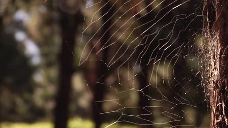 spider web : spiders web