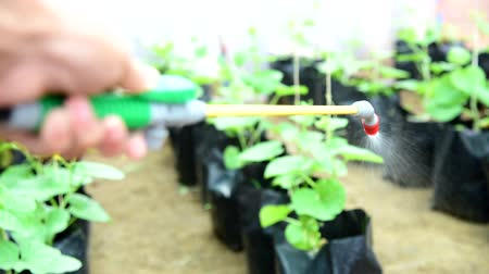 spray the Insecticide to Vegetable in farm Vídeos