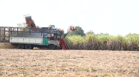 farm in brazil : harvest the sugarcane by Sugarcane harvester Stock Footage