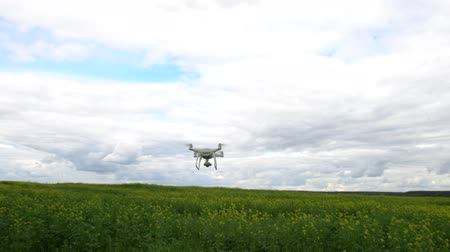 Shooting of the flight of drone over field of mustard. Flower fields. Unmanned