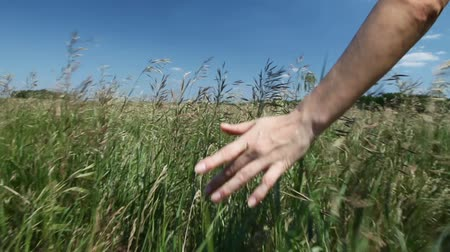 womans hand : Close up of womans hand moves and touches the grass Stock Footage
