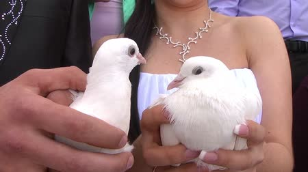 tenderness : Close-up of pigeons in the hands of the bride and groom. Stock Footage