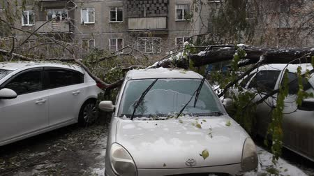 повреждение : After the storm. Large Tree Fell On A Car.