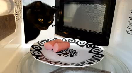 fogão : Cat steals sausage from the microwave.