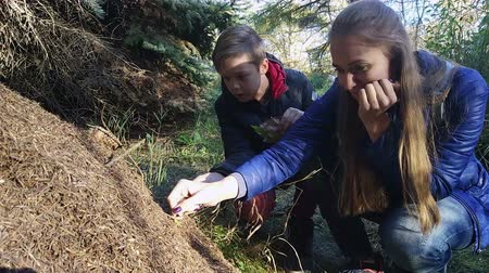 gnaw : Woman and his son are eating ant acids in anthill in the forest