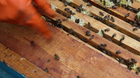 mel : The Group of Bees in The Hive. Work in The Apiary Beekeeper. Preparations Before Rocking Honey