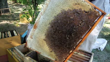 apiary : The Employee Selects the Apiary Bee Frames Stock Footage