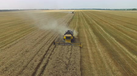 trator : Combine harvester gathers the grain. The flight over a field of wheat. aerial survey