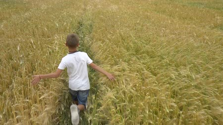 campo grano : A boy runs across the wheat field