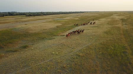 untamed : A herd of wild horses in a desert area. Aerial survey