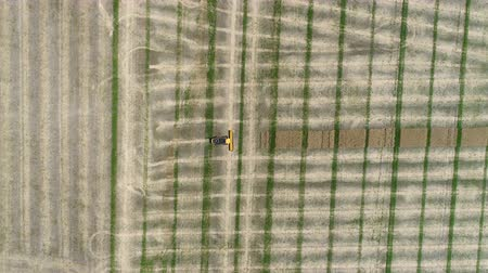 canola : Harvester collects colza. Aerial