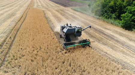 reaping : Old harvester reaps wheat. Aerial Stock Footage