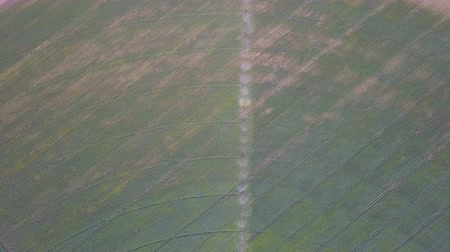 flying video : Irrigation system of fields. Aerial