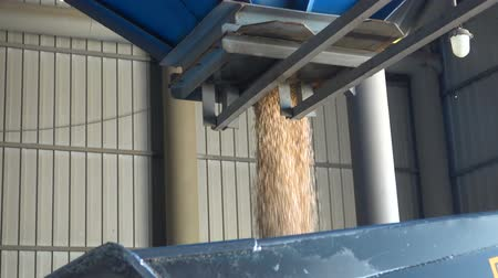 ervilhas : Peas pouring from the bunker. Slow Motion