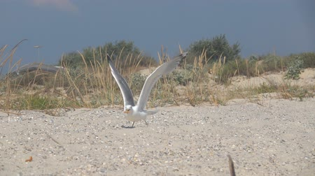 glide : Gull in the sky. Slow Motion