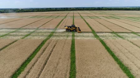 菜種 : Ukraine, Dnipro - July 4, 2018: Harvester New Holland CX 8.80 collects colza. Aerial