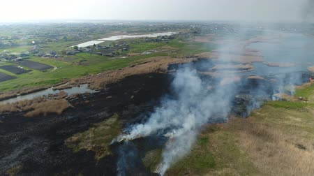 field survey : Flying over the river with reeds. Fire reed on the river near the village. Aerial survey Stock Footage