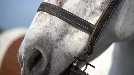 копытное : White horse on the farm. Close-up