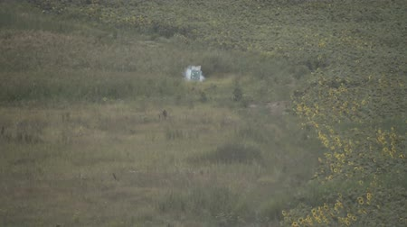 grenade : Explosive cartridge hit the target. Training at a military training ground. Slow motion