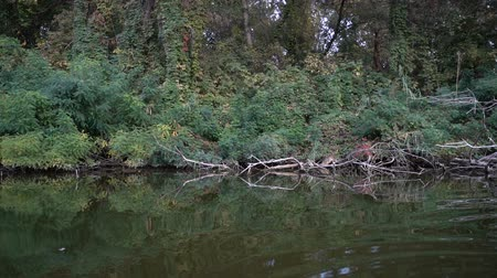 esőerdő : View of river vegetation from a floating boat boats. Slow motion Stock mozgókép