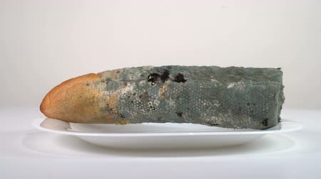 hijenik olmayan : Mouldy white bread in a plate rotates in front of the camera Stok Video