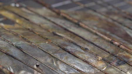 fried stake : Fish fried at the stake in a metal grill Stock Footage