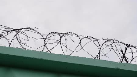 farpa : Barbed wire in prison. Jail wire with barb. Green fence with barbed wire against gray sky.
