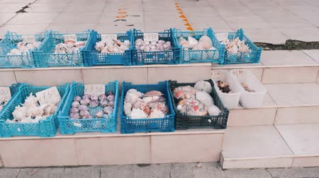 muszla : Plastic baskets filled with sea souvenirs of seashells on street. Flea market.