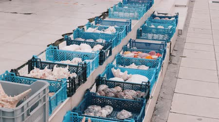 muszla : Fishmarket blue baskets with seashells, oysters, sea stars, shells, cockleshell, mollusk souvenirs