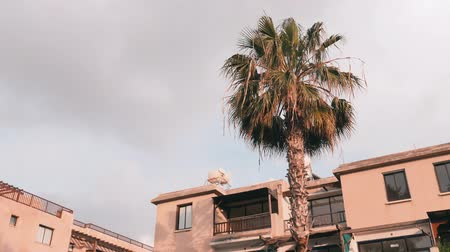 monção : Palm tree with hotel on the background. Side view of palm. Palms leaves swaying in wind. Gray sky with palm.