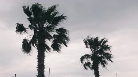 typhoon : Palm trees waving with strong wind. Palm trees swaying in wind. Strong wind bending palm leaves. Bad stormy rainy weather on beach Stock Footage