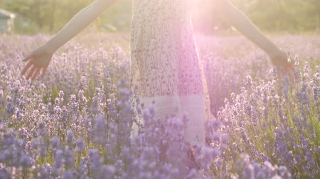little girl walking in the flowering violet field touching lavender flowers Wideo