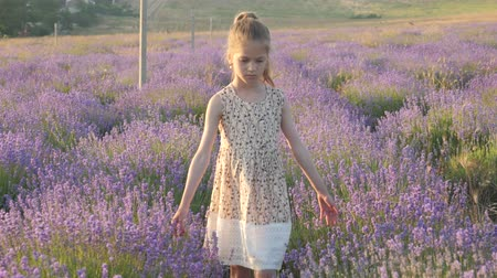 beautiful little girl walking on the field of lavender Wideo