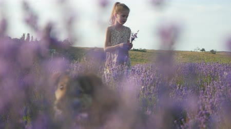little girl with her dog stands in a field of flowers Dostupné videozáznamy
