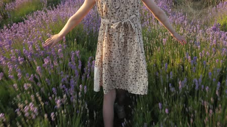 little girl in the dress goes through the flower field of lavender at summer sunset Wideo