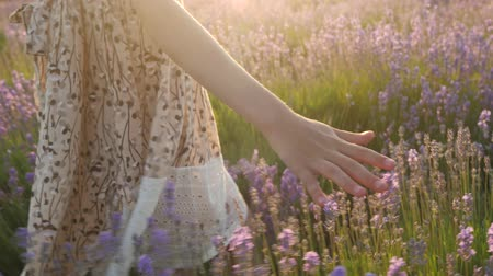 close-up of a little girls hand passes through the lavender field Wideo