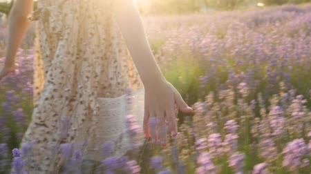 part body little girl. close-up of fingers. colorful plants and flowers lavender flowering season. summer vacation travel nature countryside. beautiful view lighting warm sun. glare light glows shine. lifestyle feelings emotions. filming motion Wideo