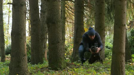 pat : attractive man walks with a dog. dog walking autumn season in Park. owner caress dogs. French bulldog. traveling with a pet outdoors in forest Stock Footage