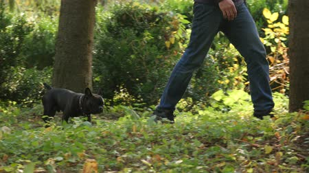body part, feet of man walking in park area with his dog. AUTUMN FOREST WALK. devotion animals. Wideo