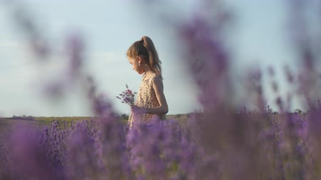 summer vacation in the countryside. childrens health clean air. beautiful little girl picking flowers in the field.