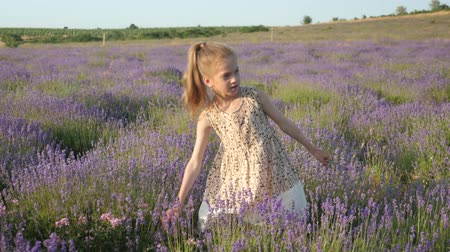 little girl on vacation summertime. lavender flowers collect in countryside Wideo