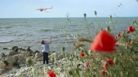 little boy standing on the beach. strong breeze. red poppy