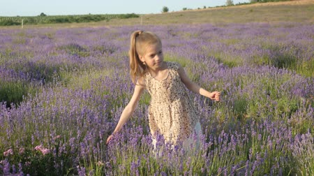 herbalist : idyllic scene little blond girl on summertime holiday. lavender flowers collect in countryside. beautiful landscape in Provence