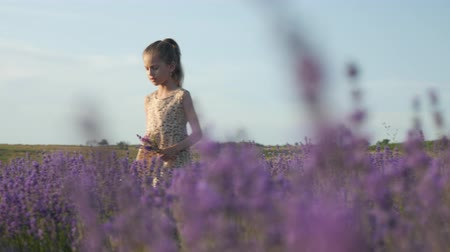 herbalist : cute little blonde girl walks outdoors in a field of flowers hold in hands a bouquet of lavender. beauty and health Stock Footage