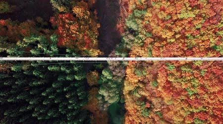подвесной : Aerial view of people walking on Suspension footbridge Geierlay (Hangeseilbrucke Geierlay), Germany