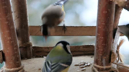besleyici : Titmouse eat in the bird house