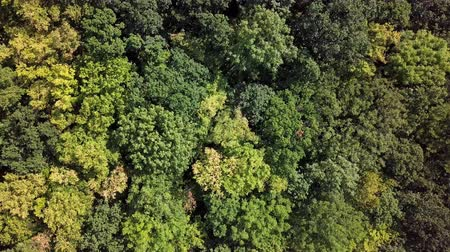 oscilante : Aerial top down view of top of summer forest with moderate wind background