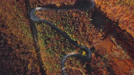Overhead aerial view of winding mountain road in sunny autumn forest.