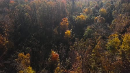 Overhead aerial view of top of autumn forest.